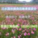 三明将乐县砂质土壤绿化草籽播种技术