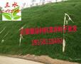 贵州六盘水草籽价格/优质六盘水草籽批发采购图片