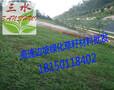 贵州铜仁玉屏狗牙根种子石阡黑麦草种子思南花种子图片