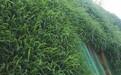 黔南水库护坡绿化草籽草种出售