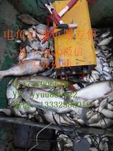 背式电鱼机介绍图片