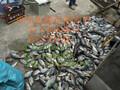 超声波捕鱼器价格最好图片