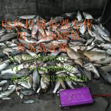 发电机电鱼器图图片