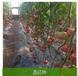 物流对青岛蔬菜配送的重要意义