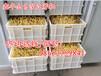 棗莊全自動豆芽機器山東豆芽機制造廠家智能淋水控溫豆芽機節能豆芽機價格