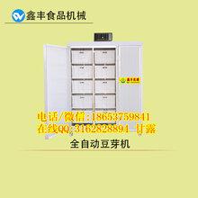 苏州家用豆芽机的价格自动恒温豆芽机鑫丰商用全自动豆芽机