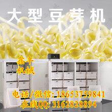 臨沂全自動豆芽機家用豆芽機使用說明鑫豐豆芽生產機廠家圖片