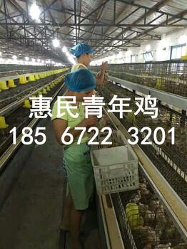 鹤壁青年鸡养殖基地