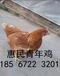 張家口60天的青年雞價格