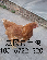 驻马店蛋鸡品种