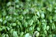 越來越暢銷的致富新秀山東益康園芽苗菜