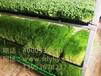 山東益康園芽苗菜--讓您心動的好項目