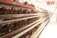 自动化养鸡设备价格