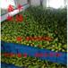 洛阳小型豆芽机全自动豆芽机全自动豆芽机价格