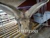 广州惠州肉兔养殖场种兔养殖多少利润肉兔多少钱一只