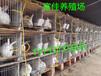 湖北杂交野兔养殖基地种兔最新价格肉兔养殖前景
