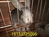 杂交野兔养殖一年能赚多少钱最新养殖成本及效益分析