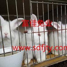 现在长毛兔价格明年长毛兔养殖行情分析图片