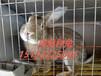 辽宁大型肉兔养殖合作社,大连肉兔养殖场