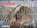 甘肃养殖兔子的销路,陇南杂交野兔养殖效益怎样图片
