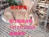 陕西肉兔价格种兔养殖利润铜川肉兔养殖场