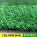 学校运动跑道足球场专用草坪四季青运动草坪环保优质草坪地毯