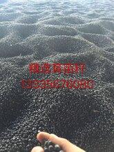 亳州牡丹籽种植基地