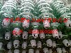 瓷瓶回收玻璃绝缘子回收厂家138-3399-5065