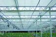温室灌溉用十字雾化器