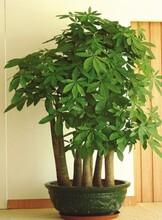江南区盆景出租租赁-江南区绿植出售-江南区盆栽预订鲜花