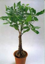 西乡塘区盆景租赁-西乡塘区绿植出售-盆栽出租鲜花订购