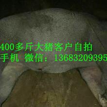 肇庆大功率捕猎野猪机器价格曝光图片