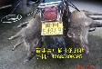 介休电网野猪捕猎机特价批发