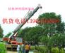 供应桂花树15公分20公分25公分30公分