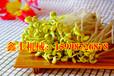 豆芽机生产技术教学马鞍山豆芽机厂家全自动芽苗菜机