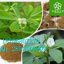 葫芦巴提取物作用纯天然优质葫芦巴粉