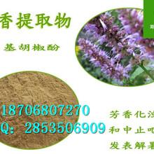 藿香提取物作用纯天然优质藿香粉