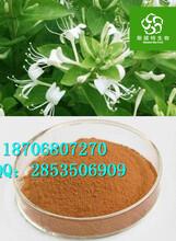 金银花提取物作用纯天然优质金银花粉