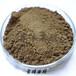 酿醋酿酒专用食醋黑曲精黑曲霉酿造发酵菌种黑曲种种球菌株