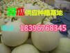 最新甜瓜价格-山东甜瓜供应基地-今日产地多少钱