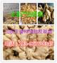 山东生姜供应基地图片