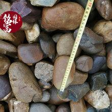 佛山鹅卵石价格-水过滤材料鹅卵石-园林铺路鹅卵石现货供应