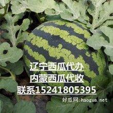 辽宁省内蒙古西瓜代办代收-新民市西瓜代收图片