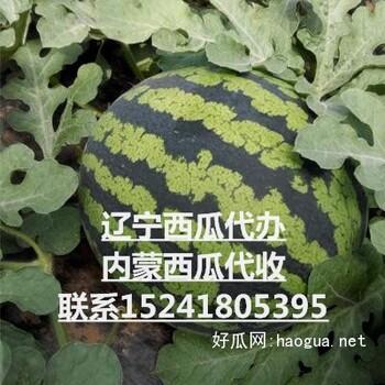 遼寧省西瓜代辦代收\\內蒙古西瓜代收價格占軍合作社