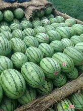 我是遼寧省蘋果代辦_遼寧蘋果代收_遼寧蘋果批發產地價格報價貨棧圖片