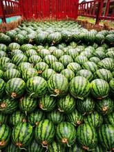 我是東北吉林省西瓜代辦_吉林西瓜批發價格貨棧電話圖片