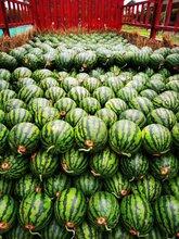 我是东北吉林省西瓜代办_吉林西瓜批发价格货栈电话图片