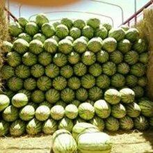 我是全国各地西瓜代办_吉林西瓜代办_吉林西瓜代收_诚信代发西瓜图片