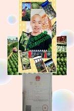 我是遼寧省新民市西瓜代辦團隊/內蒙古西瓜代收價格報價團隊圖片