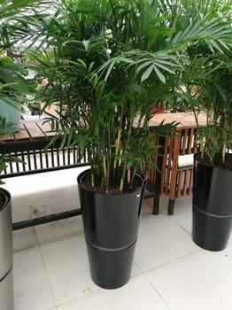 天津绿植租摆公司室内绿植设计室内花卉养护服务
